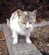 写真:かみね公園のネコ(本文とは無関係です)