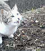 kamine-cat050312a.jpg