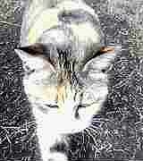 kamine-cat050312b.jpg