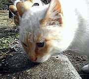 kamine-cat050312c.jpg