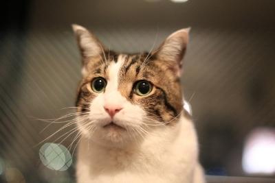pete_cat.jpg