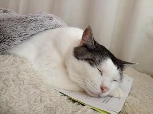 睡眠学習中の猫